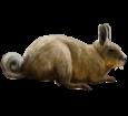 Vizcacha adulto - pelaje 52