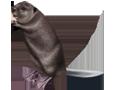 Castor adulto - pelaje 26