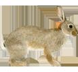 Conejo  adulto - pelaje 52