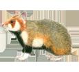 Gran hamster  - pelaje 39