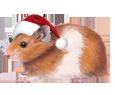 Hamster dorado adulto - pelaje 117