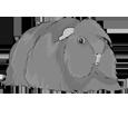 Conejillo de Indias peruano adulto - pelaje 1340000007